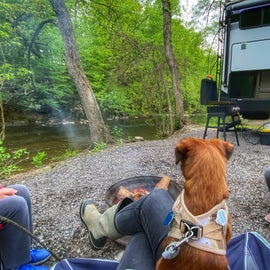 Gorgeous campsite in the woods along Marsh Creek