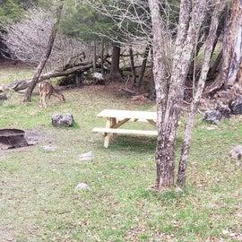 Deer in Canaan Valley Resort Site  2