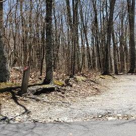 Chestnut Hollow Horse Camp Site 24
