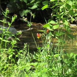 Wildflowers by nearby creek