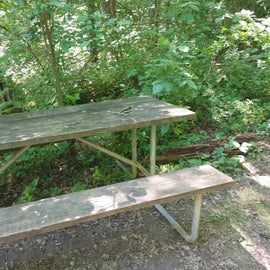 Campsite 12 table in the weeds and poison ivy.