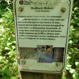 Example of information found near the trees.