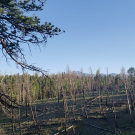 Burn site view from campground
