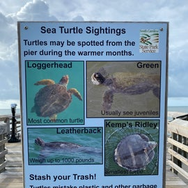 Lots of sea turtles abound!