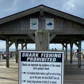 Mind the sharks!
