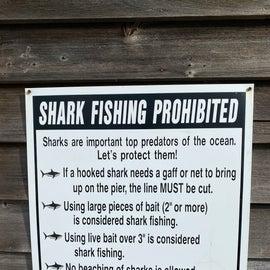 Don't catch shark!