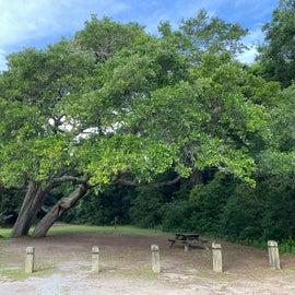 Nice picnic areas abound everywhere!