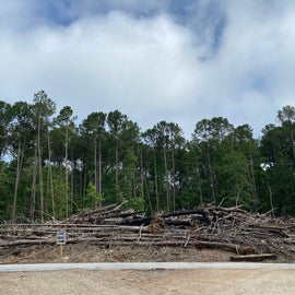 Upon exciting the immediate campsite circular path, this pile of freshly removed trees is what confronts you