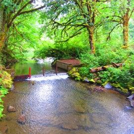 Beautiful view of creek from footbridge