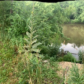 panoramic from the back of campsite 45