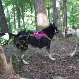 At the campsite, both our babies had so much room to run around & play, I had my husky on a 30tf. leash & she did get tangled up a bit.
