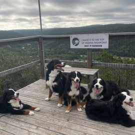 Doggies at the top of the resort