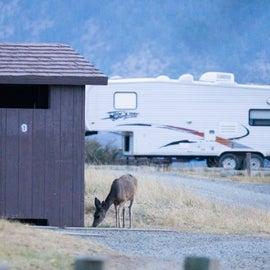 Deer, Vault Toilet, Trailer