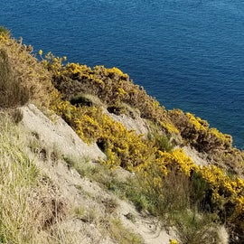 Fort Ebey bluff