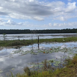 Waterfowl and alligators galore!
