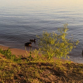 O S M R Ducks.