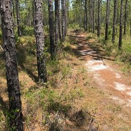 On the Eastern Lake Hiking Trail.