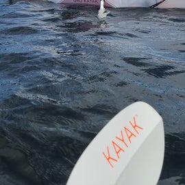 amazing kayaking spots!