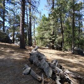 Idylwild Campground