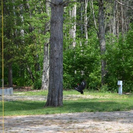 campsite with woodpecker