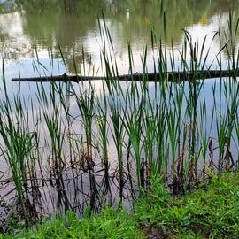 Quaint little duck pond.