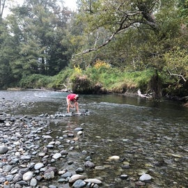 Breaking up man-made dams so the salmon could swim freely