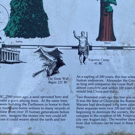 Cool historical signs