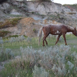 Wild horse not bothered by men.