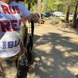 Trout caught from Hume lake