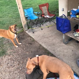 dogs not allowed in cabins!! kept them in the tent