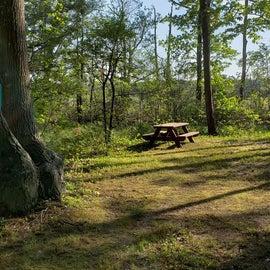 Tidewater Campground Site 16M