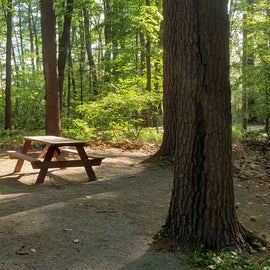 Tidewater Campground Site D4