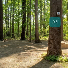 Tidewater Campground Site D5