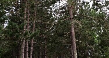Sturgeon Lake Group Campsite - McCarthy Beach State Park