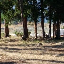 campsite 2S6
