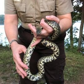 Ranger gave a nature program on snakes!