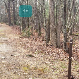 Lake Dennison Site 46
