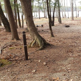 Lake Dennison Site 41
