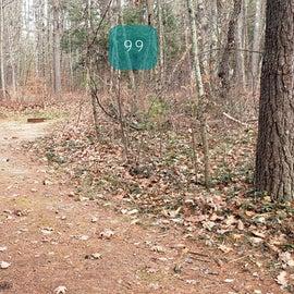 Lake Dennison Site 99