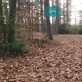 Lake Dennison Site 146