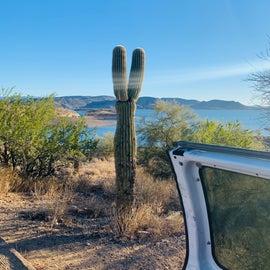 view from desert tortoise