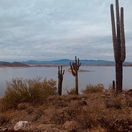 view from Roadrunner