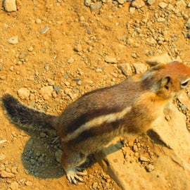 chipmunks were everywhere on the top of Mount Howard and at the campground-so cute!
