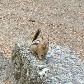 chipmunk visitor at campground