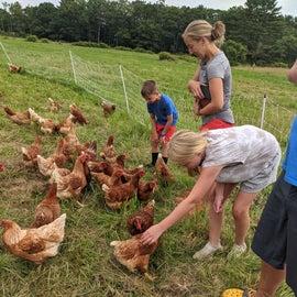 fun with chickens! we got to take home a dozen farm fresh eggs.