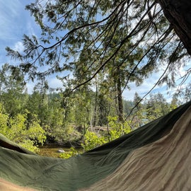Great trees for hammocking