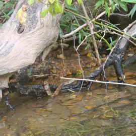 Sssssssssnake of the water variety