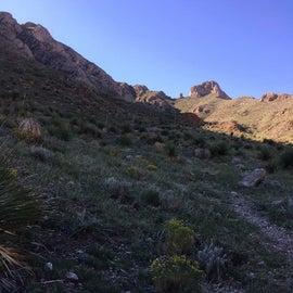 Beginning of trail to the tops of the Franklin Mountains