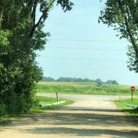 corn field vista