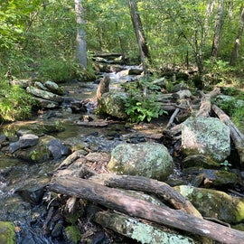 don't miss Collins Creek Trailhead, just a few miles away. Short, easy trail, beautiful (COLD IN JULY) creek!